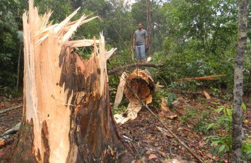 Windstorm damage in Amazon forest.
