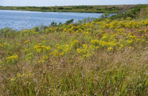 scenic sandplain grasslands