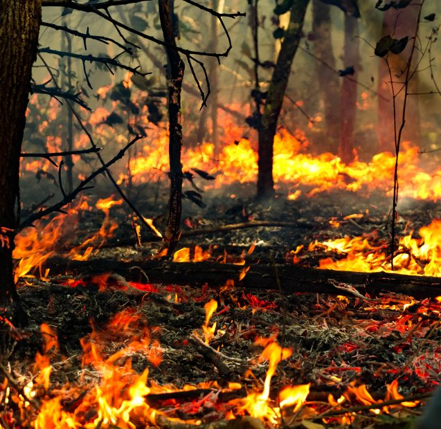 Close view of fire in Amazon forest.