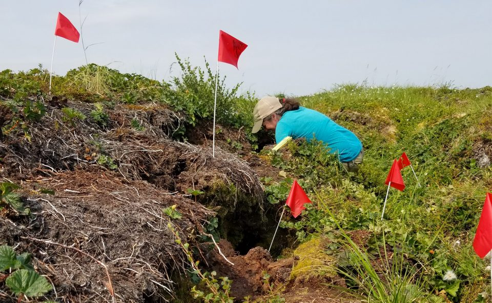 "Dr. Sue Natali examines thawed permafrost ""slumps"" in Alaska's Yukon River Delta"