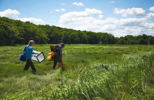 Walking through wetlands carrying equipment to a testing site.