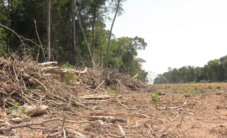 swath of cut trees in an Amazon forest