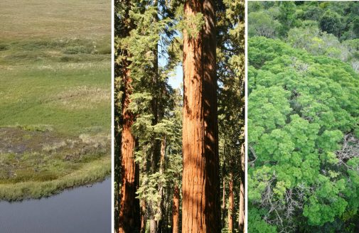 Photo collage of Arctic tundra, pine forest, and Amazon forest.
