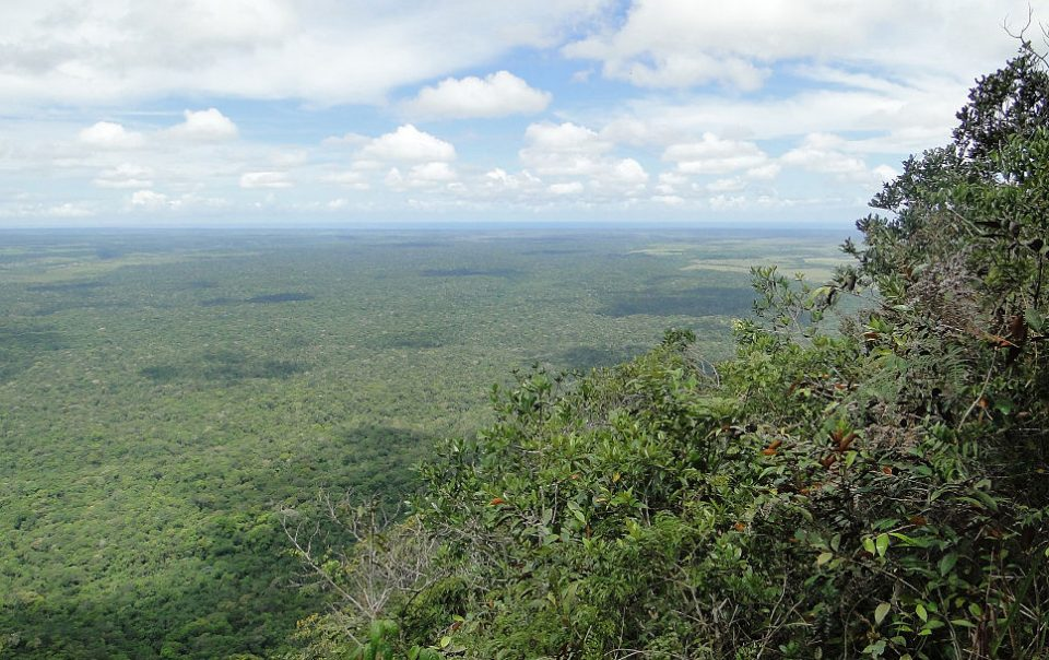 Panoramic view over Brazilian forest.