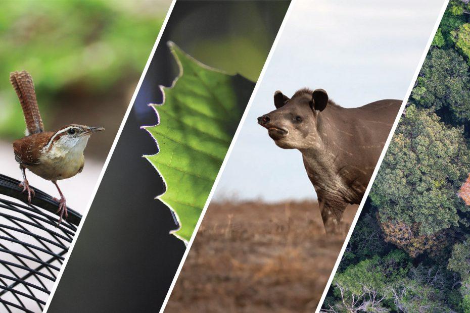 photo collage representing Kaneb Webinar Series topics.