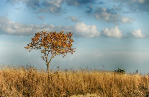 Landscape of a dry tree and field.
