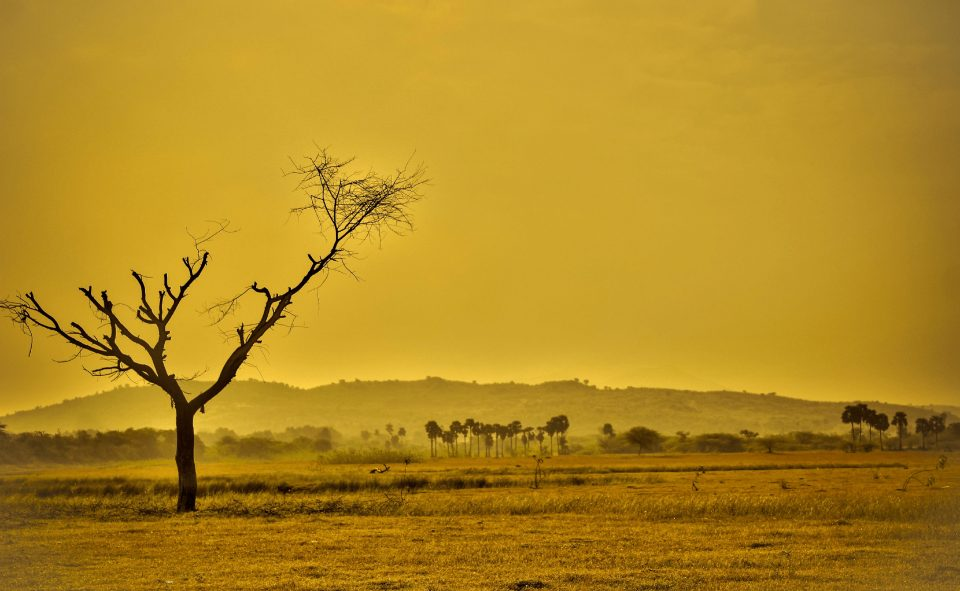 Landscape of dry savanna.