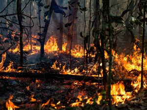 Fire in Amazon forest.