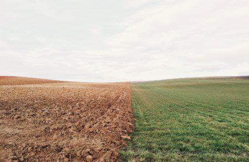 farmland of crop field next to meadow.