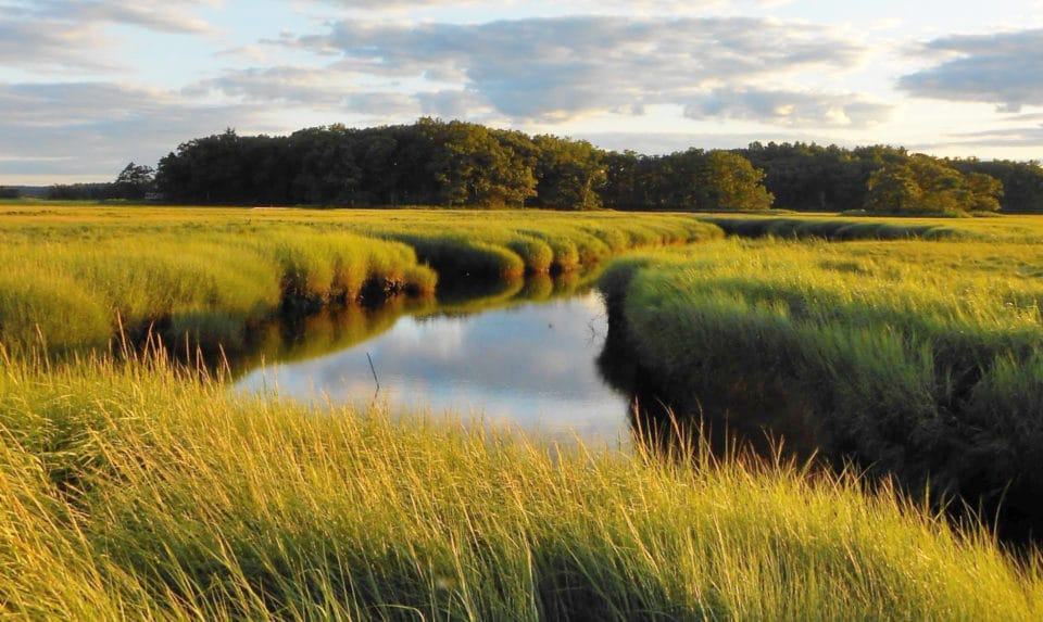 West Creek at Plum Island, photo by by David S. Johnson of Virginia Institute of Marine Science