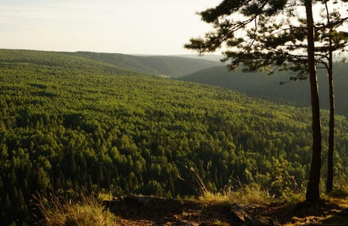 Forest as seen from a hilltop