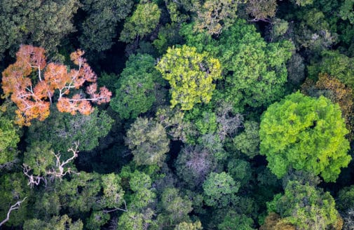 bird's eye view of Amazon forest