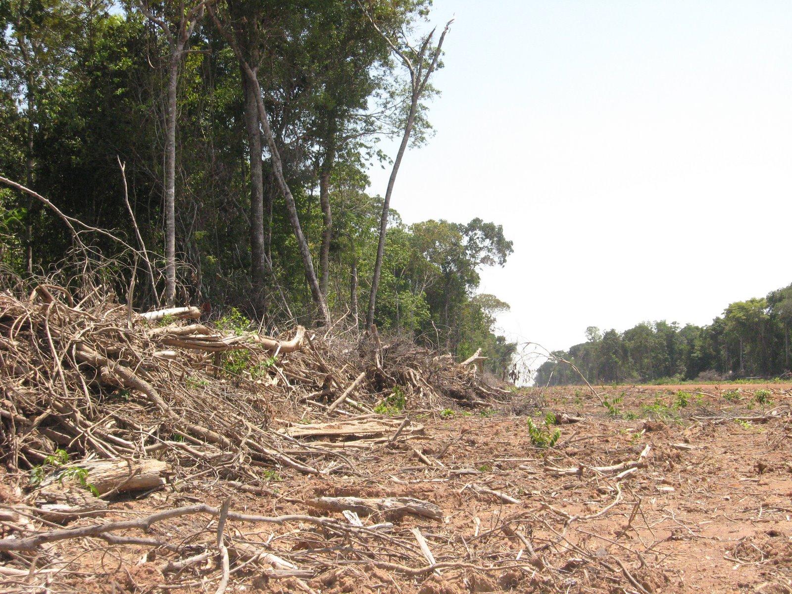Deforestation in the Amazon, photo by Paulo Brando