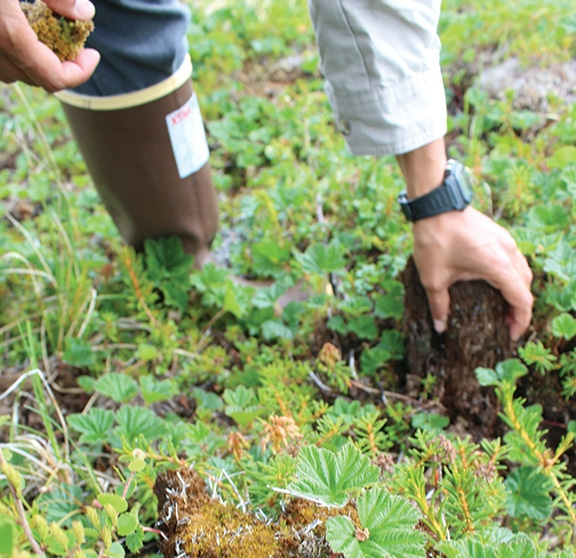 picking up chunks of soil in the Arctic tundra