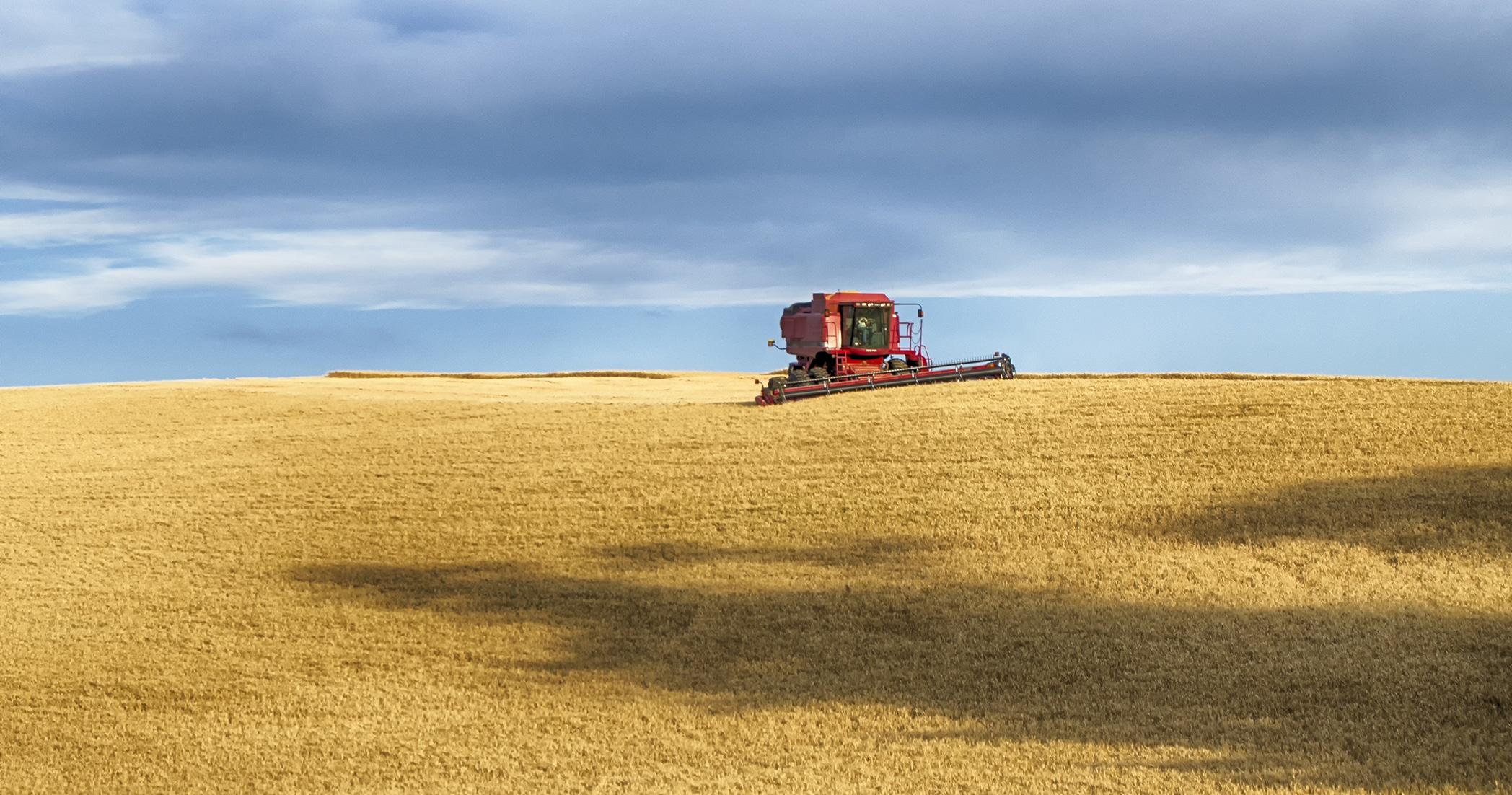 Idaho wheat harvesting