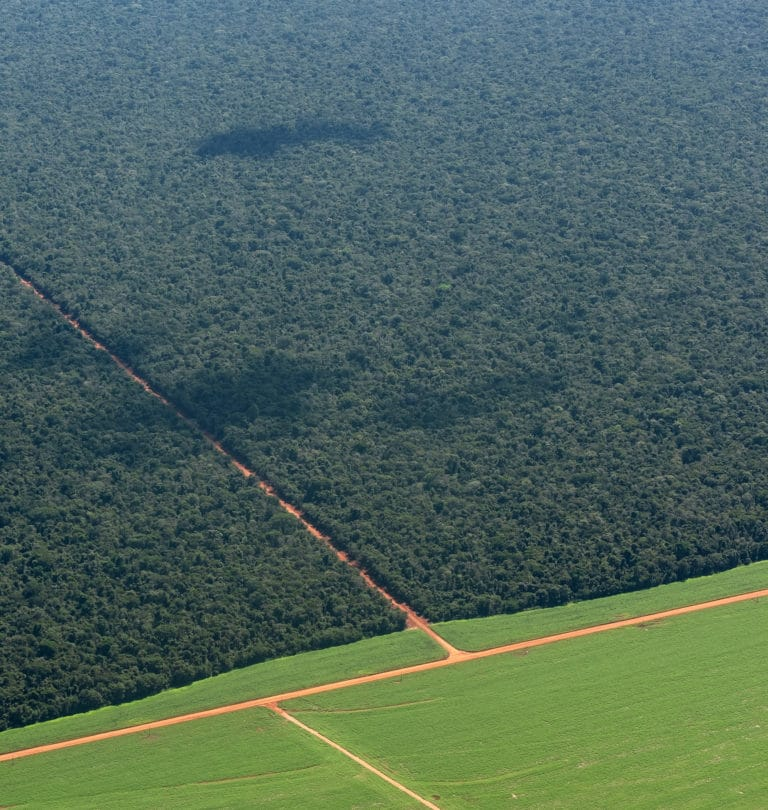 Where agriculture meets rainforest in the Amazon / photo by Paulo Brando