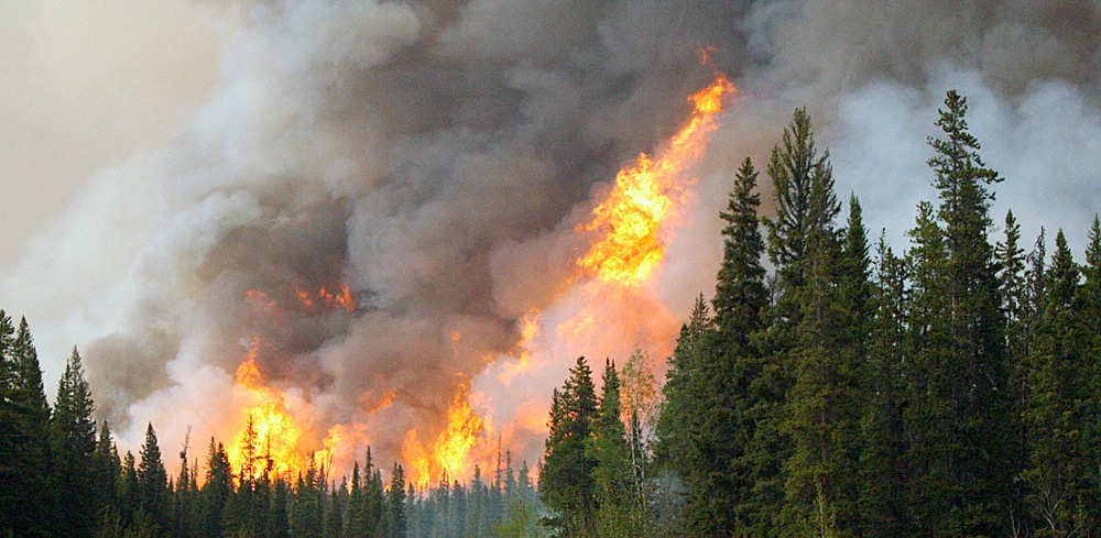 Boreal forest fire flames
