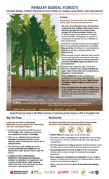 thumbnail image of Primary Boreal Forests pdf