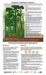 thumbnail image of Primary Temperate Forests pdf