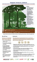 thumbnail image of Primary Tropical Forests pdf