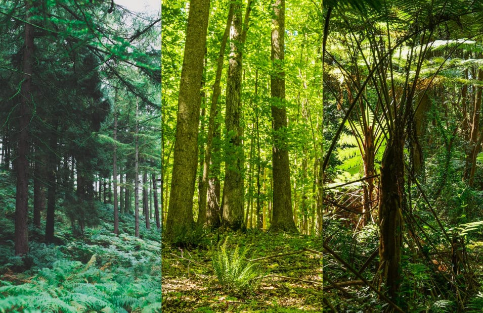 primary forests: boreal, temperate, and tropical