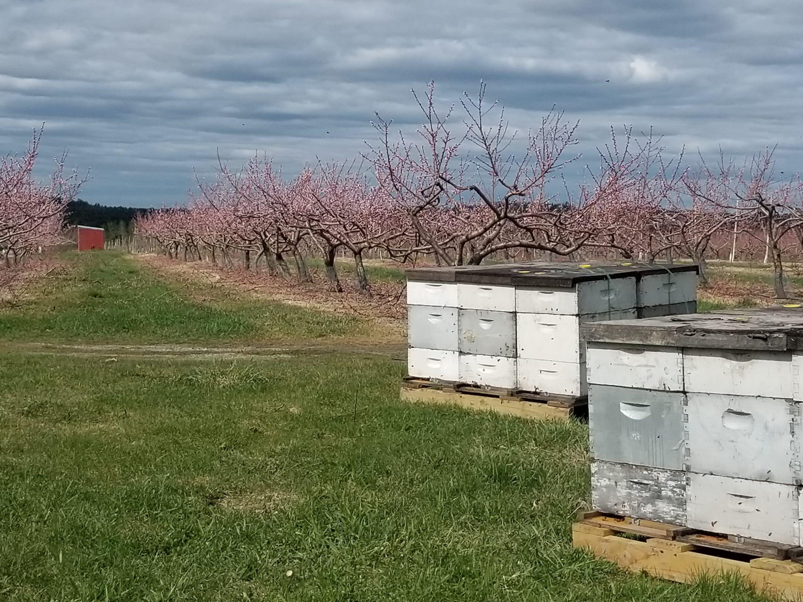 apple orchard in Bolton Massachusetts