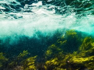 underwater view of wave and seaweed