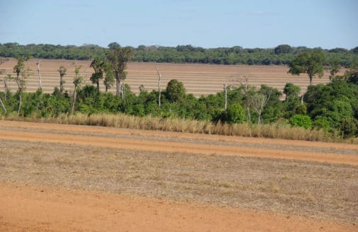 riparian forest in an agricultural field in Brazil